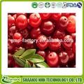 extrato de mirtilo extrato de cranberry vaccinium myrtillus extrato