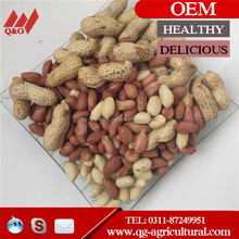 factory price raw peanuts in shell from China, Chinese peanuts in shell 9/11, 11/13 for sale