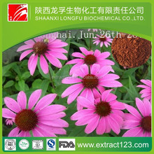 Factory supply natural echinacea purpurea extract in bulk