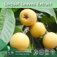 Free Sample Loquat Leaf Extract, Ursolic Acid 25%-98% ,High Grade Loquat P.E. Powder