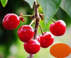 100% organic fruit with professional design acerola cherry fruit extract powder