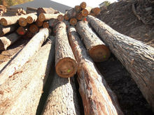 High Quality Hickory Logs for export