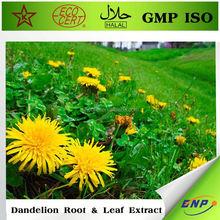 certified dandelion extract herb extract