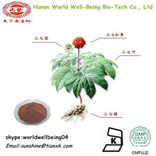 Panax Notoginseng Extract Powder / Radix Notoginseng Powder / Notoginseng Powder 80%UV Free Sample