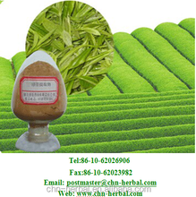 Green Tea Extract/green tea extract catechinic acid/green tea extract powder