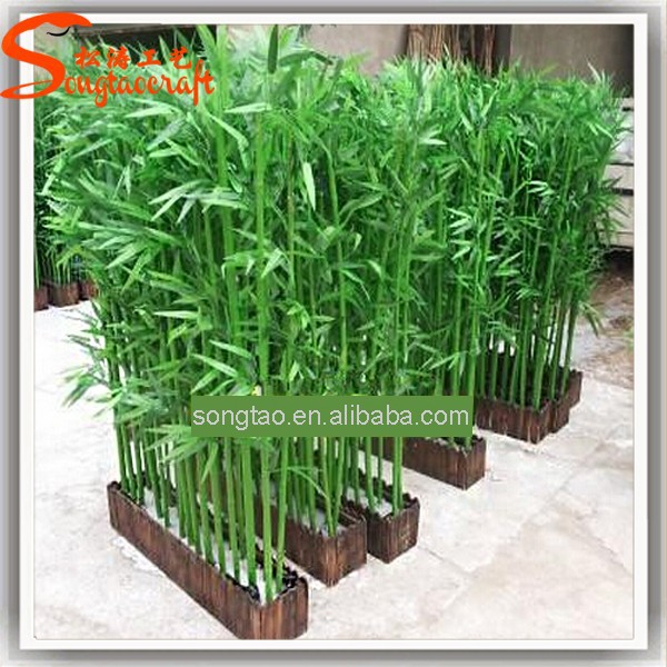 Garden Design Garden Design with How To Grow A Bamboo Privacy