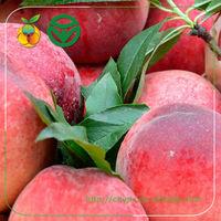 Bulk Fresh Stone Fruit /Red Organic Peaches/NO pesticides