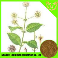 No Any Excipient Uncaria Extract