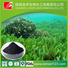Manufacturer sales organic seaweed extract