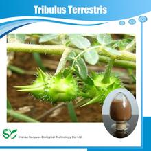 100% natural plant extract powder tribulus terrestris