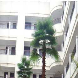 SJZJN 277 Landscaping Real Look and Touch Artificial Palm Tree on Sale/Fake Palm Tree Hot Sale In China