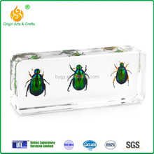 2015 new insect specimen science model for kids