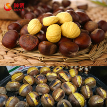 Organic Fresh Chestnuts wholesale--best chestnuts in the world