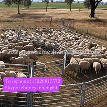 High quality round goat yard panels/sheep round panels yard/round pen yard panels(delivery fast)