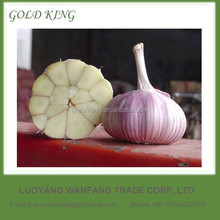 Natural Super White and Normal White Garlic Price in China