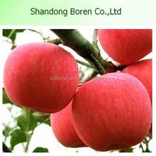 Wholesale China red fuji Apple fresh