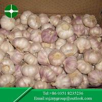 4.5-6.0 cm Normal White Garlic in 10KG Carton