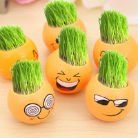 Q006 Modern hot selling pot plants Expression of grass doll mini potted plants