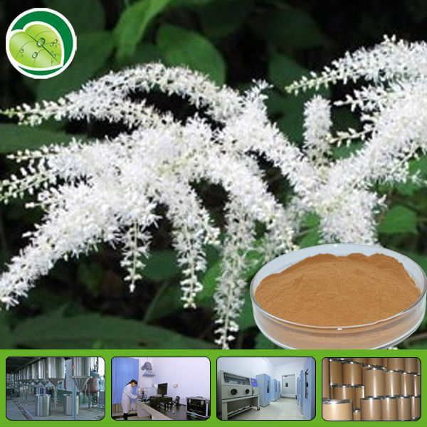 100% Natural Black Cohosh Extract Powder