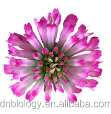 Red Clover Extraction/P.E./100% Natural Red Clover Extract Powder Isoflavone Red Clover Extract 8% Isoflavones Powder