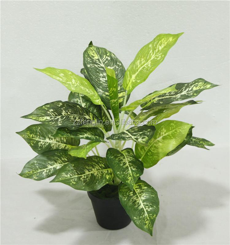 Pas cher gros ext rieur int rieur plante en pot for Plante decorative exterieure