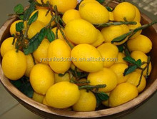 First level quality fake fruits of lemon/Simulation Artificial lemon fruits props for holiday decoration in realistic looking