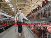 TAIYU above 95% egg production egg farm for chicken cage
