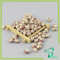 Hot Sale Dried Light Speckled Kidney Beans, Xinjiang Round Pinto Beans