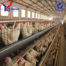 layer egg chicken cage / poultry farm house design