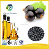 2015 hot sale Factory wholesale edible organic black currant seed oil with best price /Vegetable Oil / plant oil /