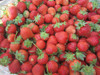 New Crop A13 IQF Strawberry Size 25-35mm