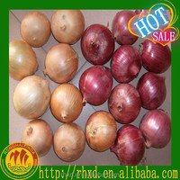 Factory Supply Fresh Onion Importer From Dubai