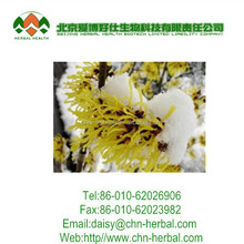 High Quality Witch Hazel Extract 10:1 / Hamamelis Virginiana Extract