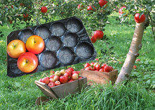 New Fruits and vegetables packing layers, plastic fruit tray, free samples