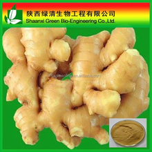 High Quality Zingiber Officinale Extract Gingerols/Gmp Bnp Supply Pure Natural Ginger Extract Powder Curcumin 95% Gingerol