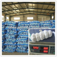 2013 exportador de ajo blanco fresco de Xinjiang China, Precio de mercado de ajo
