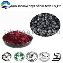 100% natural dried black currant extract / black currant extract Anthocyanidins Powder