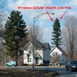 Wireless Cellular stealth pine tree china manufacturers