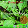 China Supply 100% Natural Plantain Extract Powder 5:1 10:1 Aucubin/Pantago lanceolata