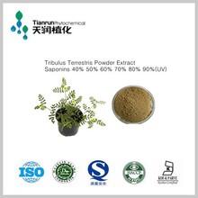 natural tribulus saponins 96% best price