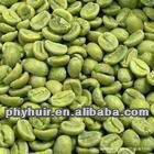 green coffee bean extract / Chlorogenic Acid