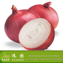 Supplier of fresh onion from China/Hot sale onion