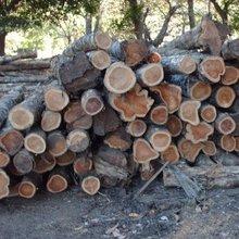 Teak Wood round / Squares Logs