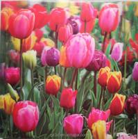 Good price beautiful flower 3D lenticular picture