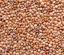 Red Whole Lentils -Canadian Origin -100 % L/C Payment