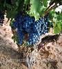 /p-detail/Vino-Tinto-Ribera-del-Duero-Marca-de-calidad-PAGO-joven-400001493060.html