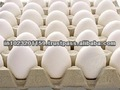 De huevo de gallina/concha blanca del huevo/de huevo