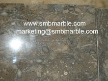 Finely Double Polished Fossil Limestone (Dark Grey) at Cheap Rates