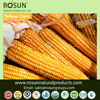 Organic and Conventional whole Dry yellow corn/Maize - ROSUN NATURAL PRODUCTS PVT LTD