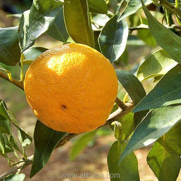 fruit juce